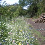Wild flowers and log pile in the new orchard